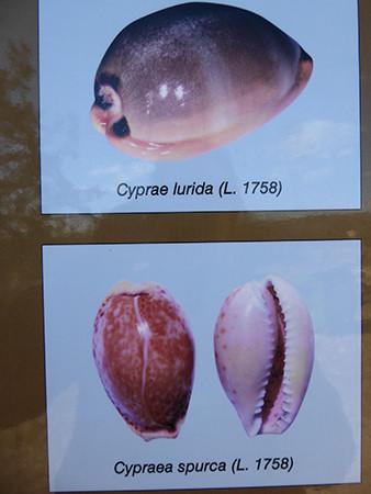 Palaepaphos-Cyprus-9-450.jpg