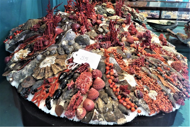 Peter Cokes Shell Museum 4.jpg