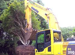 Transplante de Árvores
