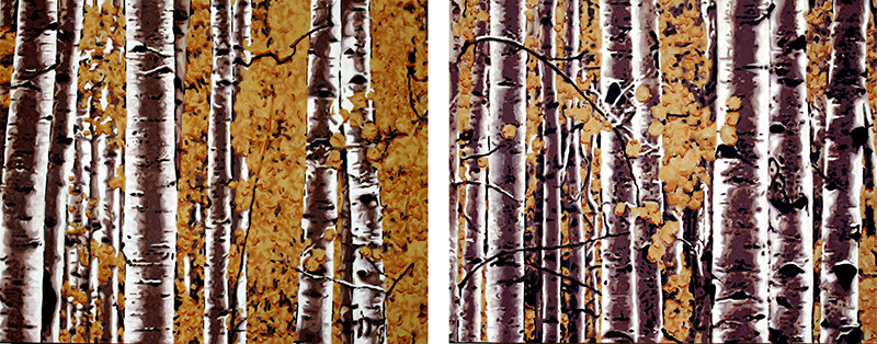 fall in the aspen grove