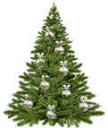 christmas-tree-1853582_1920.png