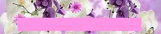 orchids-862899_fr.jpg