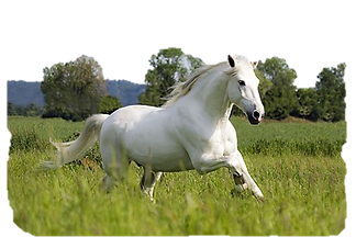 witte paard.png