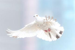 vrijheid.jpg