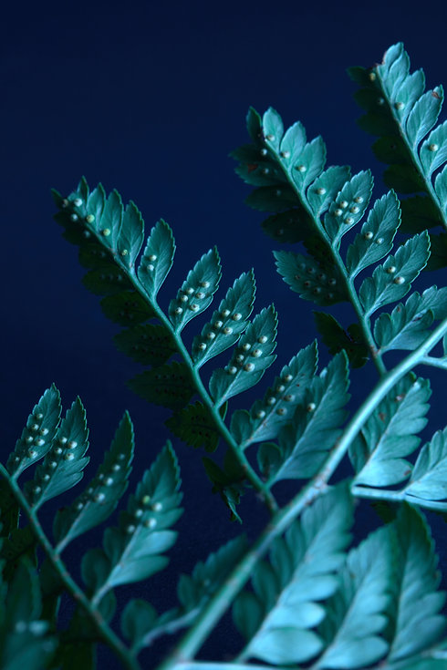 natural-pattern-of-leaves-of-ferns-on-a-