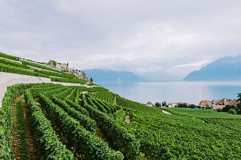 vineyards-with-mountains-and-lake-view-Z