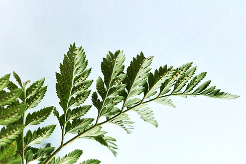 closeup-of-a-branch-of-fern-on-a-gray-ba
