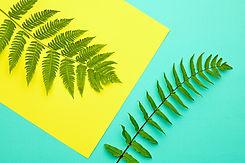 summer-fern-P7GBQ6H.jpg