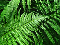 green-fern-leafs-background-PRKHCRP.jpg