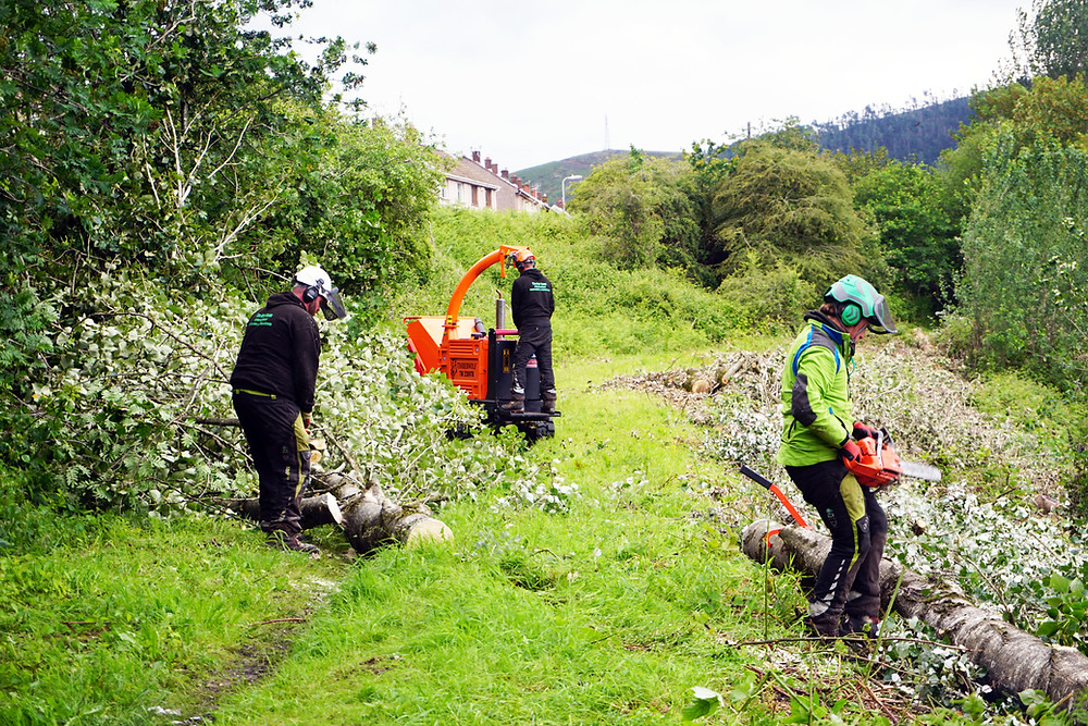 Tree Surgeon Swansea | Tree Surgeons working