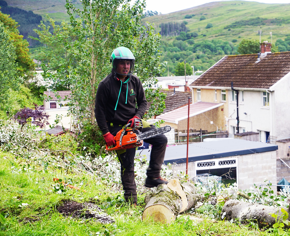 Tree Surgeon Swansea | Tree Surgeon Working