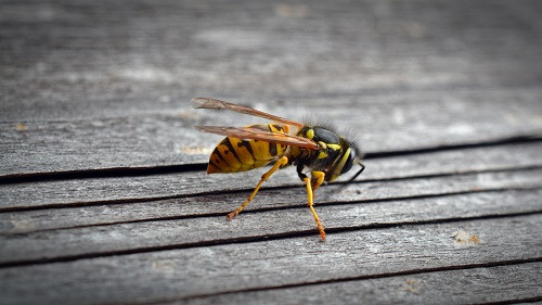 Keeping Your Office Free from Pests During the Summer