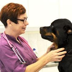 Eläinlääkäri Hinnasto