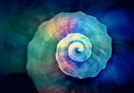 snail_shell_spiral_snail_shell_meeresbew