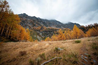 Couleurs flamboyantes de l'automne dans un paysage de montagne