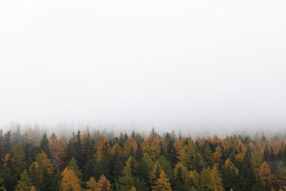 Paysage de forêt aux couleurs d'automne dans les nuages