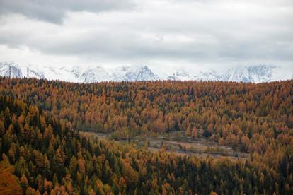 Forêt d'automne et arrière-plan hivernal avec les montagnes enneigées