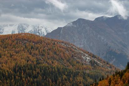 Forêt d'automne en haute montagne