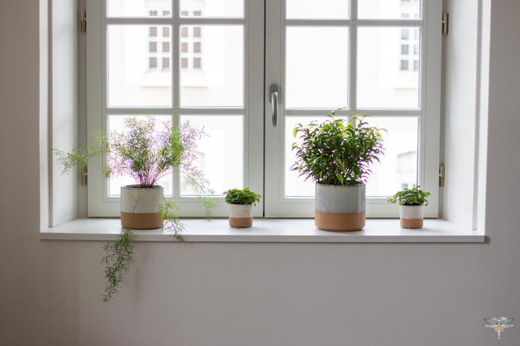 Aménagement et décoration d'un espace de bureaux professionnels à Senlis, pour DecoWorkers, par Carnets Libellule. Coralie Vasseur est votre architecte d'intérieur UFDI à Compiegne : plantes vertes sur le rebord de la fenêtre