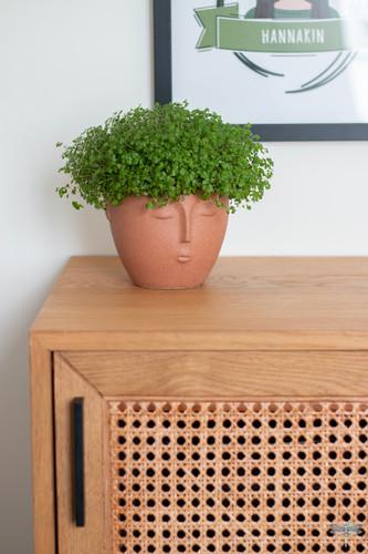 Aménagement et décoration d'un espace de bureaux professionnels à Senlis, pour DecoWorkers, par Carnets Libellule. Coralie Vasseur est votre architecte d'intérieur UFDI à Compiegne : zoom sur le détail du meuble en bois et cannage avec sa plante chevelue