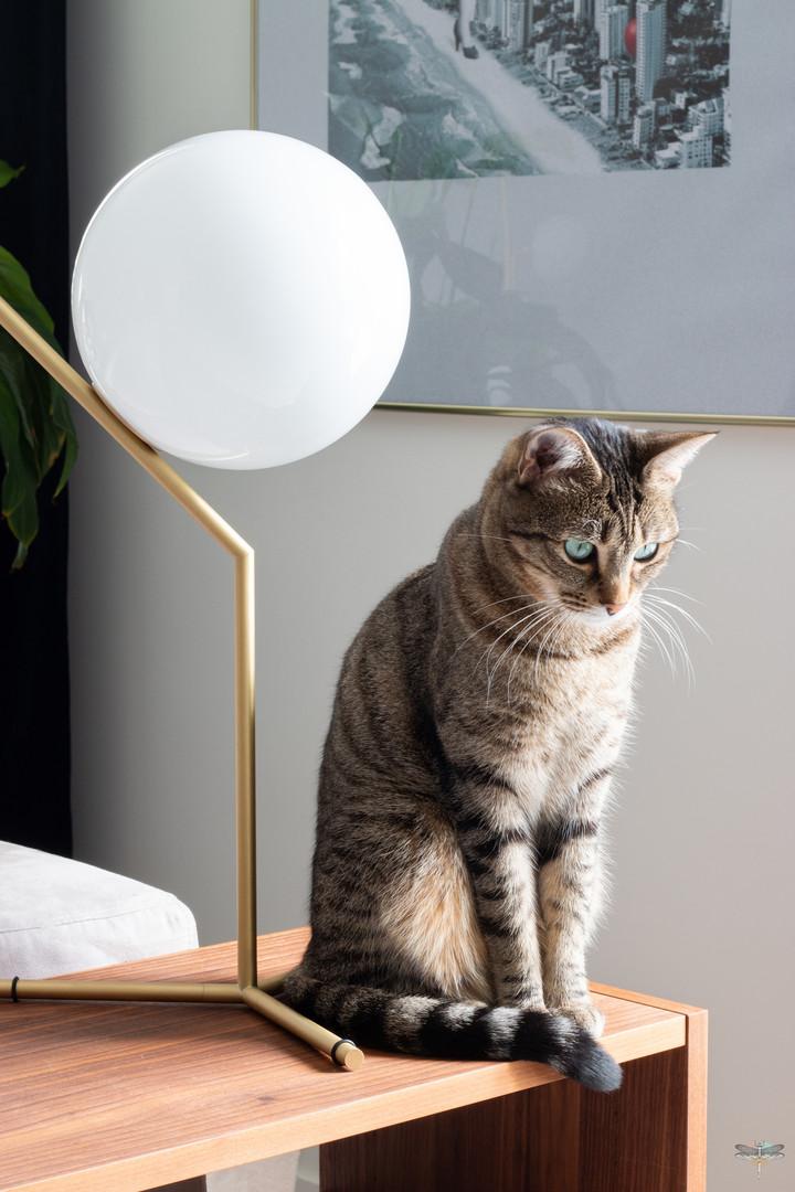 Décoration d'une pièce de vie chic et poétique à Compiègne par Carnets Libellule. Coralie Vasseur est votre Décoratrice d'intérieur UFDI dans l'Oise : Détail sur le chat et la lampe de designer en laiton
