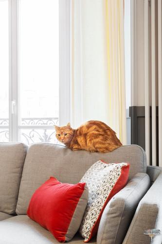 Décoration d'un double salon moderne dans un appartement Haussmannien à Paris 17 par Carnets Libellule. Coralie Vasseur est votre Décoratrice d'intérieur UFDI à Compiegne : canapé confortable gris, coussins colorés