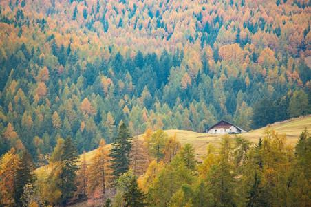 Couleurs flamboyantes de l'automne dans un paysage des Alpes Italiennes