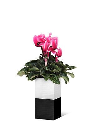 Capill'O Cube Blanc/Noir