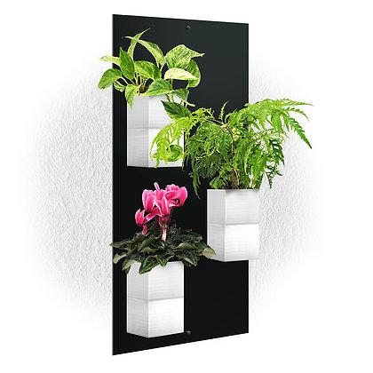 Plaque murale TRIO + 3 Capill'O Cubes Blancs