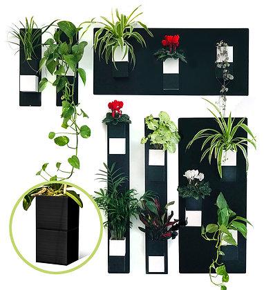 Plant wall M black pots