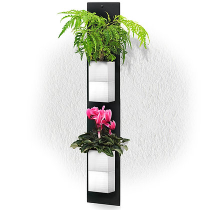 Plaque murale DUO + 2 Capill'O Cubes Blancs