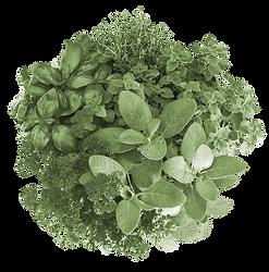 salade-bikro2.png