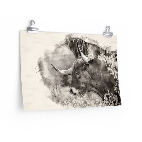 Longhorn Black and White Watercolor Print