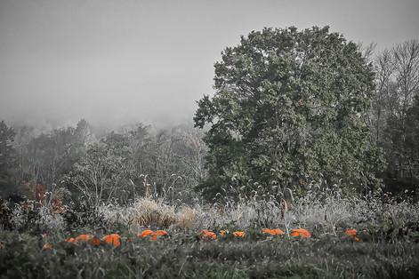 Taken with a Nikon D3500