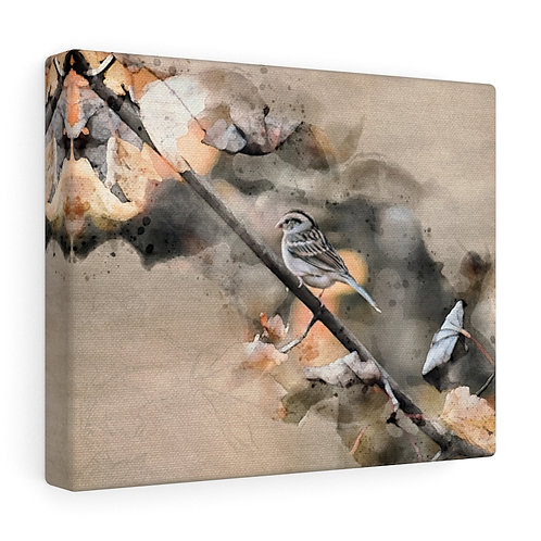 House Sparrow Watercolor Canvas
