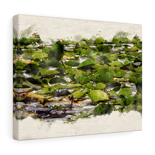 Lily Pads Watercolor Canvas