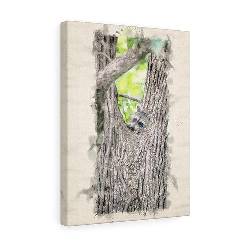 "Dangling Foot Raccoon Watercolor Canvas 12"" x 16"""