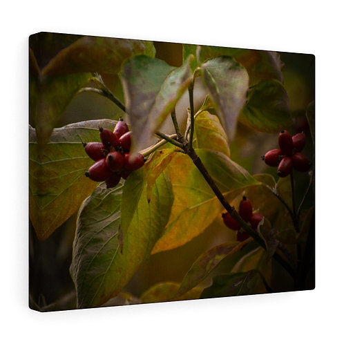 Berries in the Setting Sun Canvas