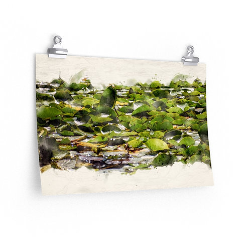 Lily Pads Watercolor Print