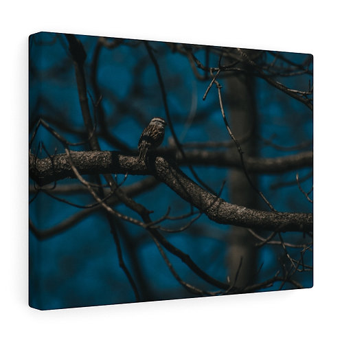 Moody Bird and Branch Canvas