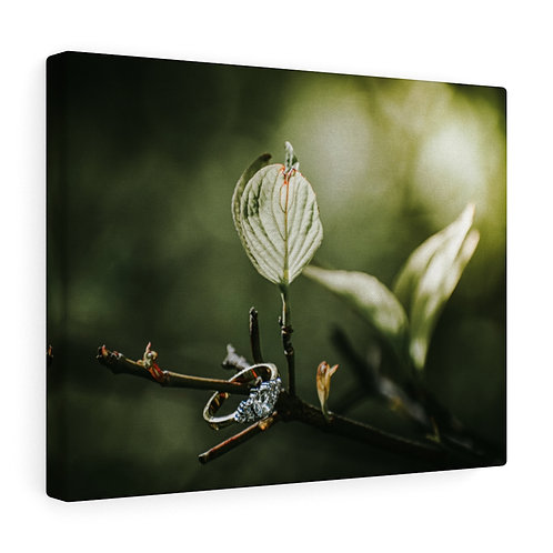 Ring and Leaf Canvas