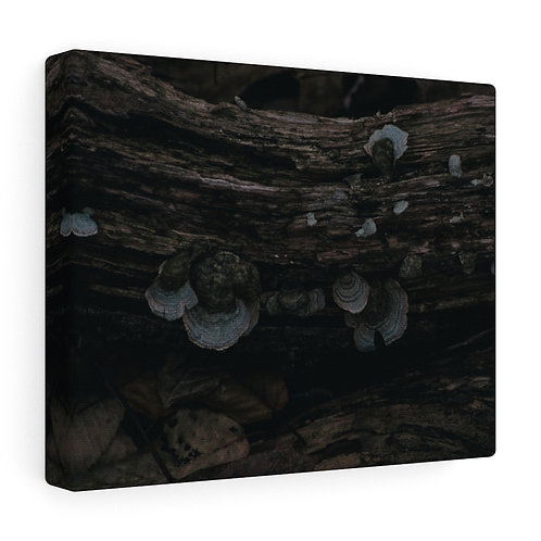 Mushrooms on a Log Canvas