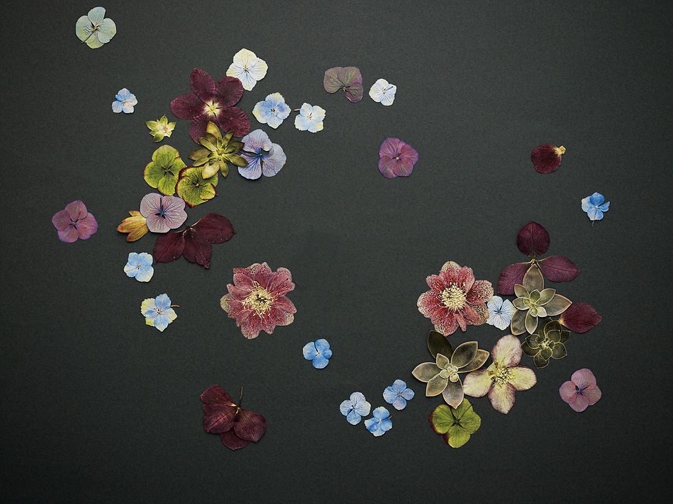 141105-bloom43769_Cut3+_M.png
