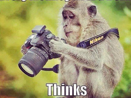 How to go from being a Monkey with a camera to being a decent photographer