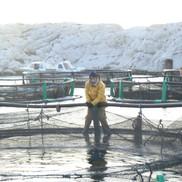 aquaculteur en train de tirer le filet(3
