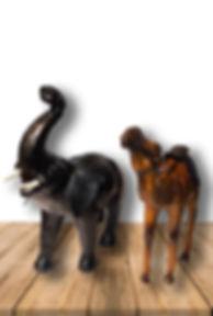 Elefante--de-cuero-portada-Animales-de-c