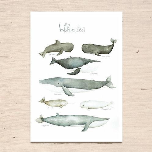 Whales Print