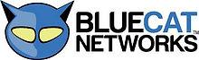 bluecat 1.jpg