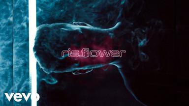 Ris Flower - Translucent