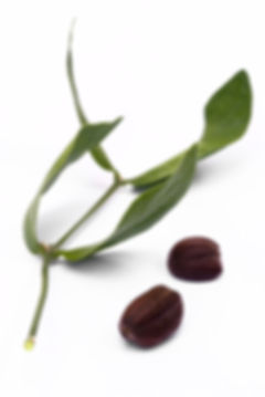 jojoba oil, greenwash